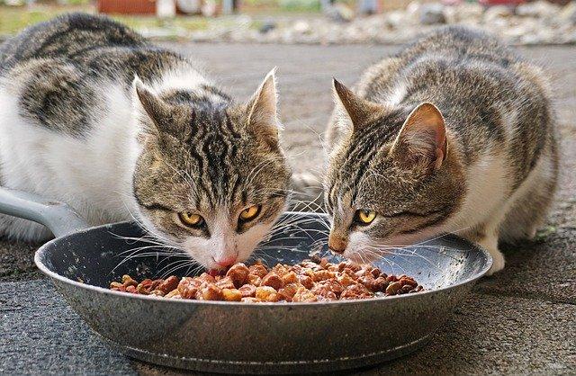 ペット用食器の除菌